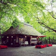 令和の一枚/至福のひととき/おでかけワンショット/新緑/春日大社/奈良/... 奈良の春日大社近くにある茶屋です。 新緑…