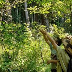 木の実好き/おでかけ/散策/木の実 ♡3人で公園散策  📷️①  リコリス(…(4枚目)