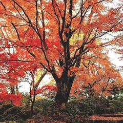 植物/おでかけ/紅葉 ♡紅葉  先日の紅葉狩り… 思いもよらず…