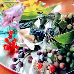 植物/秋/おでかけ/木の実/散策 ♡木の実  昨日の戦利品(の一部)  見…