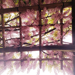 奈良/令和の一枚/GW/至福のひととき/おでかけ/風景/... 満開の藤棚。 とっても素敵でした❣️