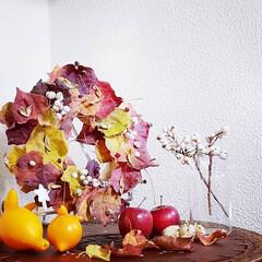 フォックスフェイス/姫りんご/ナンキンハゼ/リース/クリスマス2019/リミアの冬暮らし/... 先日来より、ひたすら集めていた葉っぱと実…