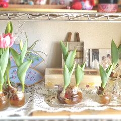 手作り/花/植物/水栽培/チューリップ/おうちごはん/... ♡おうちごはん ♡牛肉の野菜巻き(人参・…(2枚目)