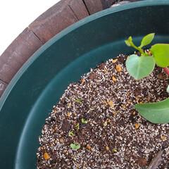 種蒔き/種/植物 ♡オカワカメ ♡クリムゾン☘️  この春…