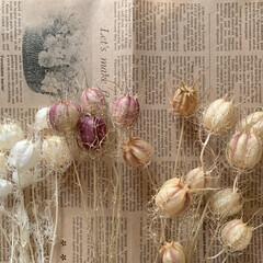ニゲラ/ドライフラワーのある暮らし/ドライフラワー/花が好き おはようございます🧸🌥  いろんな色のニ…