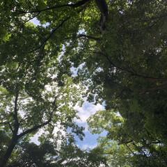 このあとビショ濡れ/雨上がり/夏の空 豪雨の中のわずかな晴れ間☀️ パシャリ📷…