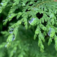 雨上がり/雨粒/植物写真 雨粒が綺麗でした☺️ もっとアップで撮り…