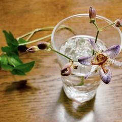 ホトトギス/花のある暮らし/花が好き おはようございます🧸🌥  近ごろ気圧の変…