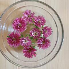 ピンク/花が好き/花のある暮らし おはようございます🧸☔️  切り花のその…