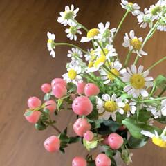 マトリカリア/ヒペリカム/花のある暮らし/花が好き/植物写真 おはようございます🧸☀️ 今日も暑くなり…