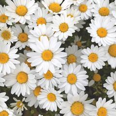 花のある暮らし/ノースポール/植物写真 おはようございます🧸☀️  昨日、今日と…