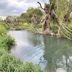 秘密の場所/川沿い散歩中/自然/散歩/緑のある暮らし 今日は日中、近くの川まで散歩に行きました…