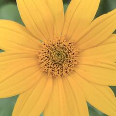 ビタミンカラー/花が好き/植物写真 おはようございます🧸☀️ 今日は晴れて暑…