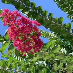 夏/花が好き/植物写真/花/空 こんにちは🧸☀️  何ヶ月かぶりに早上が…
