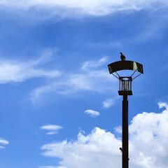 街灯/ハト/夏の空/空 街灯に鳩がとまってました🕊  絵になるな…