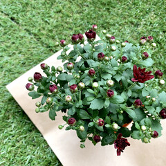 ベランダガーデン/花が好き/花 おはようございます🧸☀️ 今朝は少し肌寒…