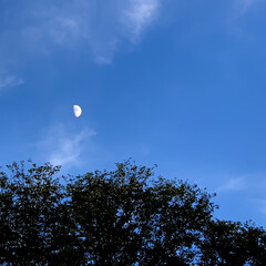 夕方の月/青空/空 こんにちは🧸🌥  少しずつですが秋の感じ…(1枚目)