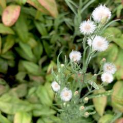 雑草/花が好き/植物写真 おはようございます🧸🔆  名もなき道端の…(1枚目)
