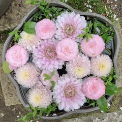 ピンク/花手水/花が好き おはようございます🧸🔆  今日もいい天気…(1枚目)