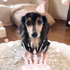 シニア犬/カニンヘンダックス/LIMIAペット同好会/犬派/いぬ/次のコンテストはコレだ! うちのマリーさん、今日で12歳になりまし…(1枚目)