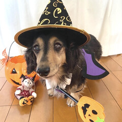ハロウィン犬/犬帽/いぬ/犬服/ハロウィン/ダイソー/... Happy Halloween 🎃👿👻 …