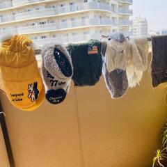 バルコニー/犬服/ベランダ/洗濯/衣替え/LIMIAペット同好会/... 衣替えのための洗濯 お犬様の分から🐶🚽🚰(2枚目)