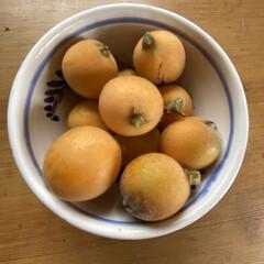 ベランダガーデニング/ガーデニング/びわ/ビワ/カニンヘン/カニンヘンダックスフンド/... うちのベランダのビワを収穫しました💕 小…(3枚目)