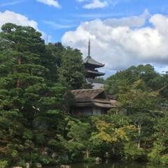 仁和寺/春のフォト投稿キャンペーン/わたしのGW 仁和寺の素敵な風景です。