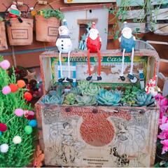 Christmas/Christmasディスプレイ/シクラメン/クリスマスツリー/クリスマス/プチプラガーデン/... 今日の多肉ちゃん🌿  最後の写真は2年前…