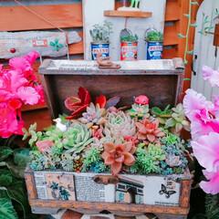 緑のある暮らし/lovegreen/多肉植物寄せ植え/Limia多肉倶楽部/limia多肉クラブ/広島タニラー/... 東京ドームで開催中の「世界らん展」21日…
