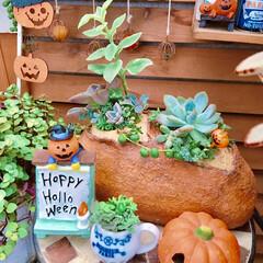 寄せ植え/多肉植物/広島多肉倶楽部/広島タニラー/halloween/ハロウィン/... 今日は多肉パン🥐  お客様お待たせいたし…