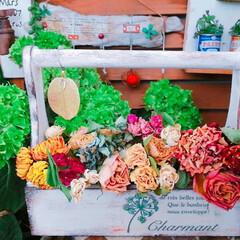 薔薇/リメ鉢/ドライフラワー/販売用/リメイク/お庭あそび/... おうちで育てた薔薇のドライフラワーです🌹…