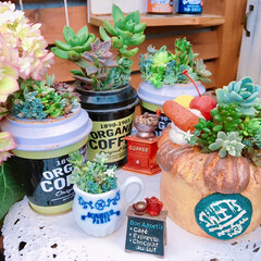 Limia多肉倶楽部/パン/succulents/多肉植物寄せ植え/広島たにらー/広島タニラー/... 今日の多肉ちゃん🌿  多肉パン🥖以外の雑…