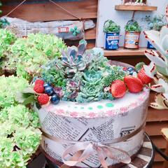 多肉/LIMIA多肉植物/Limia多肉倶楽部/広島たにらー/広島タニラー/リメイク/... 今日は多肉ケーキ🎂