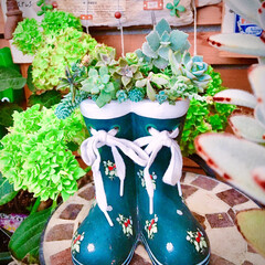 ガーデン雑貨/マイガーデン/flowers/Love Flower/紫陽花/limia多肉クラブ/... 今日の多肉ちゃん🌿  雨が降るので☔️長…