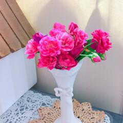 花のある暮らし/多肉初心者/多肉植物/リメ缶/オリジナルリメ缶/あじさい/... 今日の多肉ちゃん🌿&今日の薔薇🌹  1枚…(2枚目)
