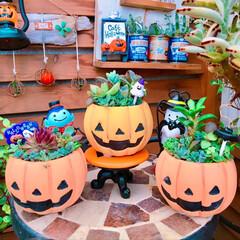 お弁当ピック/100均雑貨/多肉/LIMIAアンバサダー/リミとも部/リミとも部1期生/... Halloweenの飾り付けも後少し🎃👻…