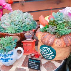陶芸作品/多肉植物のある暮らし/花のある暮らし/limia多肉クラブ/紫陽花/あじさい/... 今日の多肉ちゃん🌿 令和になってあっとい…
