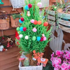 Love green/みどりのある暮らし/Christmasディスプレイ/Christmas/コニファー/クリスマス2019/... 今日はコニファー🎄