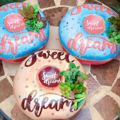 ガーデン雑貨/love/lovegreen/多肉植物のある暮らし/多肉植物/limia多肉クラブ/... 100均リメイクの多肉ドーナツ🍩 可愛く…(3枚目)