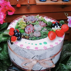 多肉植物/ケーキ鉢/ケーキ/プチプラガーデン/リメイク/寄せ植え_華/... ケーキ作りました🎂