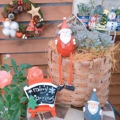 サンタクロース/Christmas/Christmasディスプレイ/ナチュラルガーデン/プロリフェラ/100均インテリア/... 今日の多肉ちゃん🌿  リース以外は多肉の…