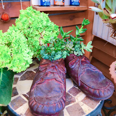 ナチュラルガーデン/ナチュラルガーデニング部/紫陽花/多肉のある暮らし/多肉植物寄せ植え/広島タニラー/... 今日の多肉ちゃん🌿