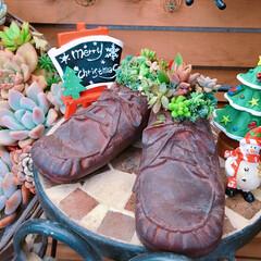 クリスマス雑貨/limia多肉クラブ/limiaタニラー/LIMIA多肉植物/広島たにらー/広島多肉倶楽部/... 今日の多肉ちゃん🌿  多肉にハマってすぐ…
