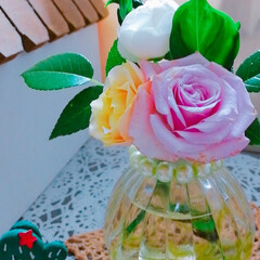 バラのある暮らし/薔薇🌹/シクラメン/多肉植物寄せ植え/おうち時間/おうち時間を楽しもう/... 今日の多肉ちゃん🌿&今日の薔薇🌹  1枚…(3枚目)