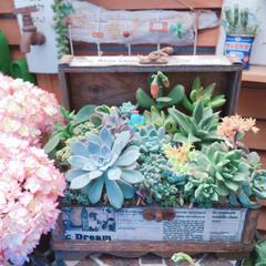 多肉植物寄せ植え/3COINS/花のある暮らし/LIMIA多肉植物/広島たにらー/広島タニラー/... 今日の多肉ちゃん🌿&今日の薔薇🌹  お気…