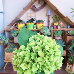 flowers/紫陽花/ドライフラワーのある暮らし/LIMIAアンバサダー/リミとも部1期生/リミとも部/... 昨日の多肉マンション🏡前の紫陽花をカット…