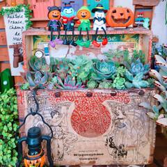 多肉植物/寄せ植え/100均雑貨/多肉/LIMIAアンバサダー/リミとも部/... 100均Halloween 雑貨🎃👻🎃🧙…