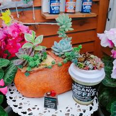 花のある暮らし/パンのある暮らし/寄せ植え/寄せ植え_華/Limia多肉倶楽部/limia多肉クラブ/... 今日の多肉ちゃん🌿 今日は29の日だった…