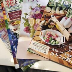 稲城市/東京都/園芸/直売所/暮らし/住まい 本日大雨。 やっと種まきが終わり、ひと段…